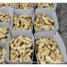 Dehydrated And Salted Dried Ginger